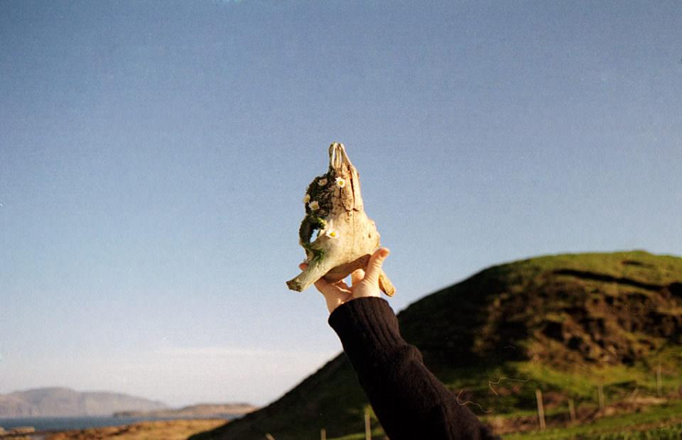 Ein Schafsschädel wird in die Luft gehalten.