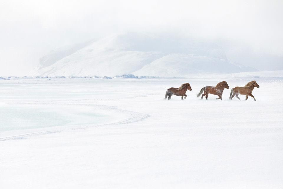 Pferde in Winterlandschaft