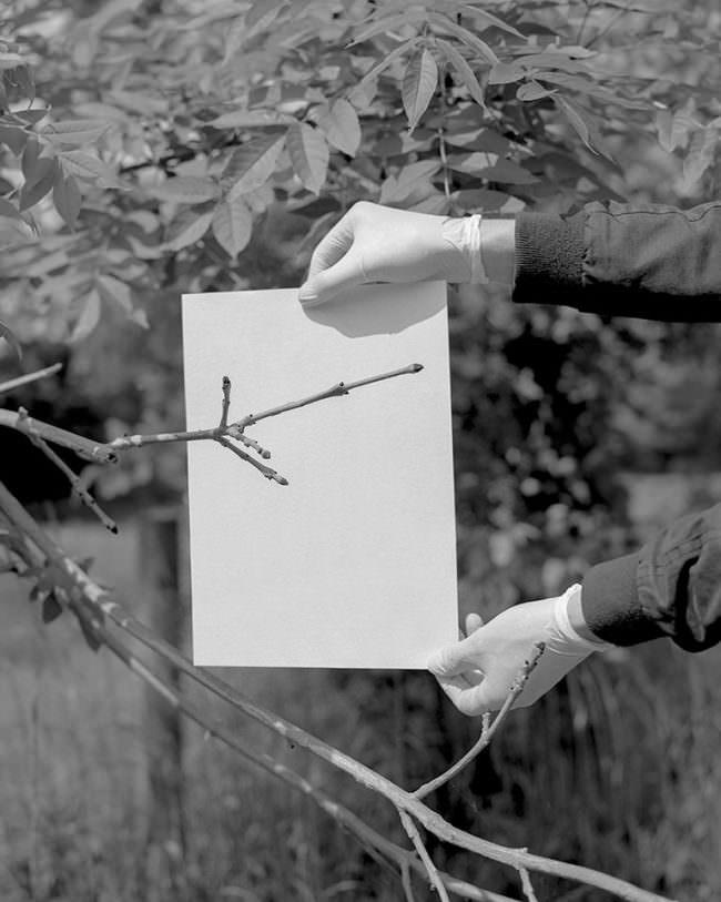 Behandschuhte Hände halten weißes Papier vor einen Zweig.