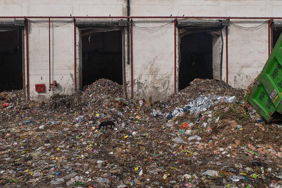 Ein streunender Hund auf einer Müllhalde
