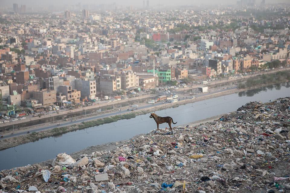 Hund auf einer Müllhalde
