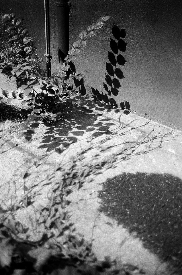 Pflanzen und Schatten auf Beton