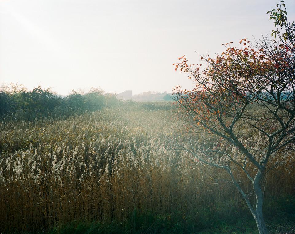Landschaft mit hohem Gras im Nebel.