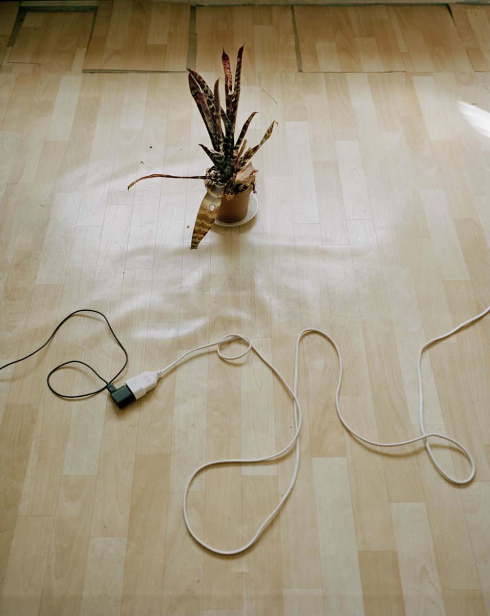 Kabel am Boden liegend, daneben eine Pflanze.