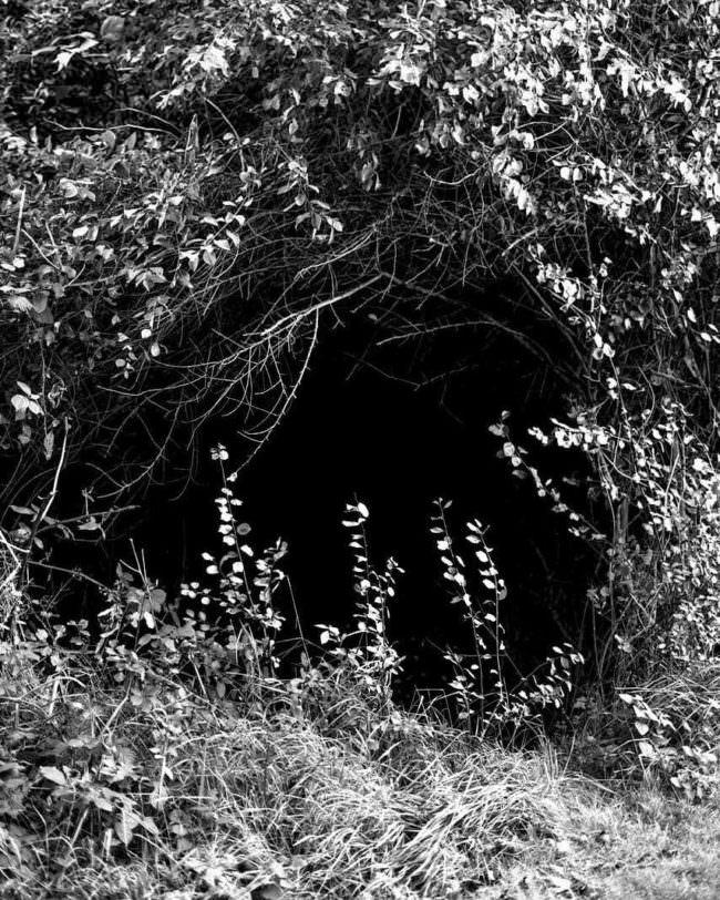Dunkler Höhleneingang im Gestrüpp.