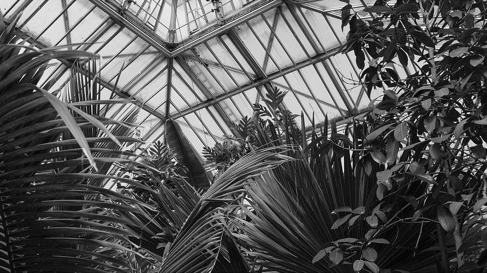 Pflanzen unter dem Dach eines großen Gewächshauses.