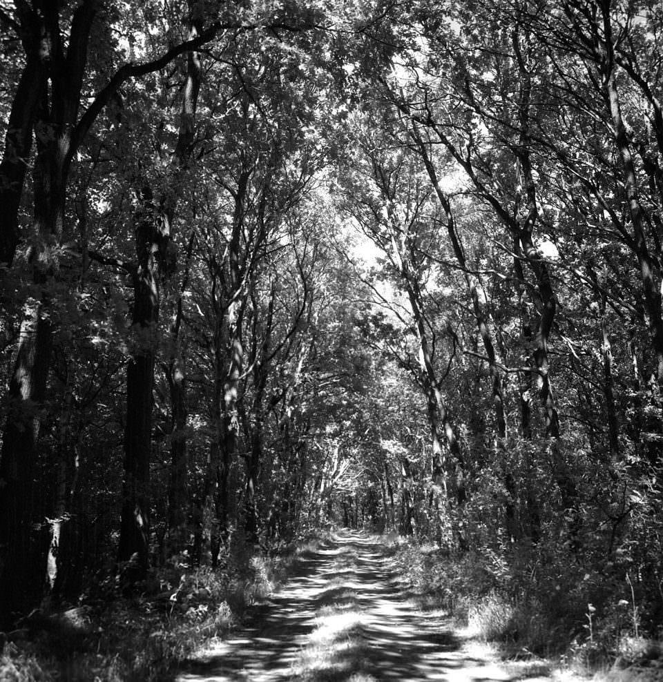Weg im Wald, durch den Sonne fällt.
