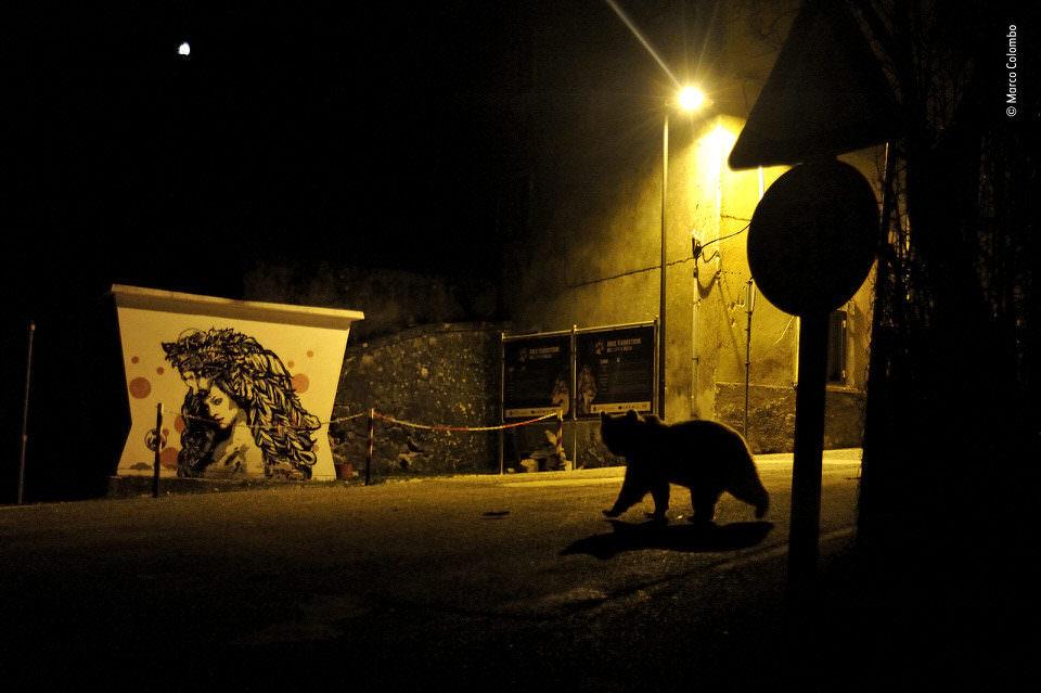 Ein Bär auf einer Straße