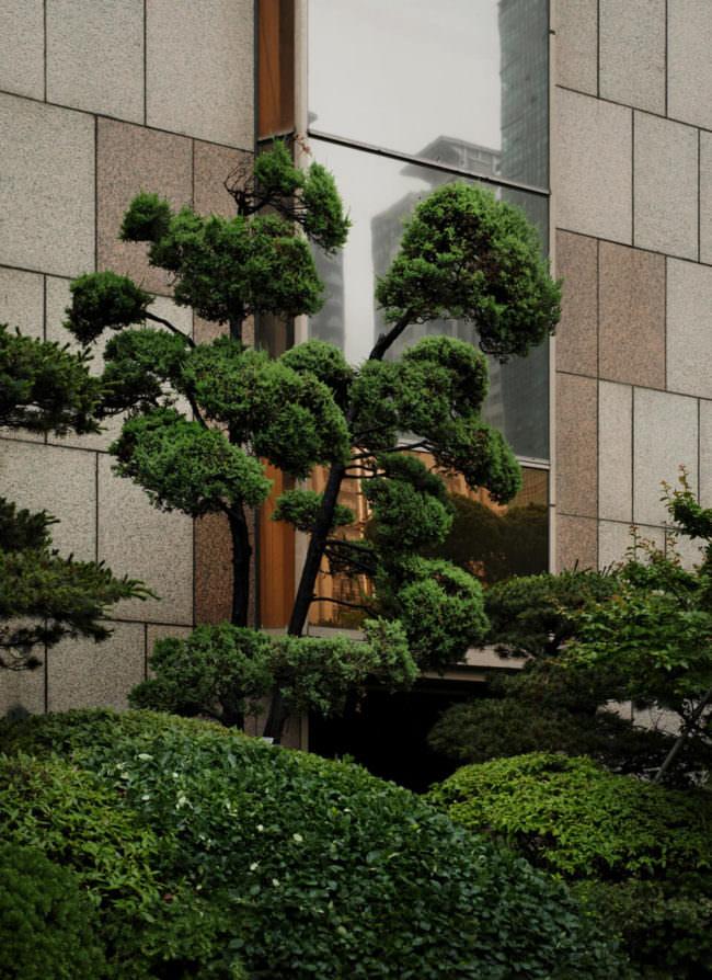 Baum vor einem hohen Gebäude