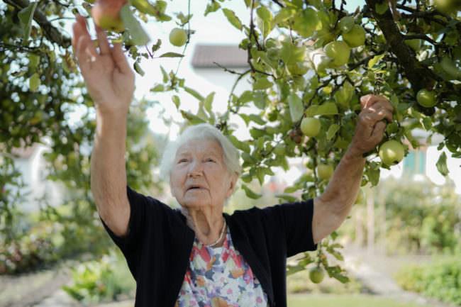 Eine Frau pflückt Äpfel