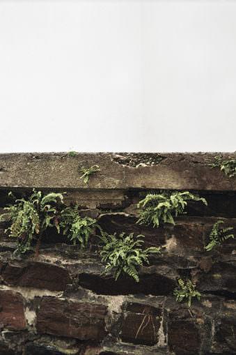 Pflanzen zwischen Mauerstein.