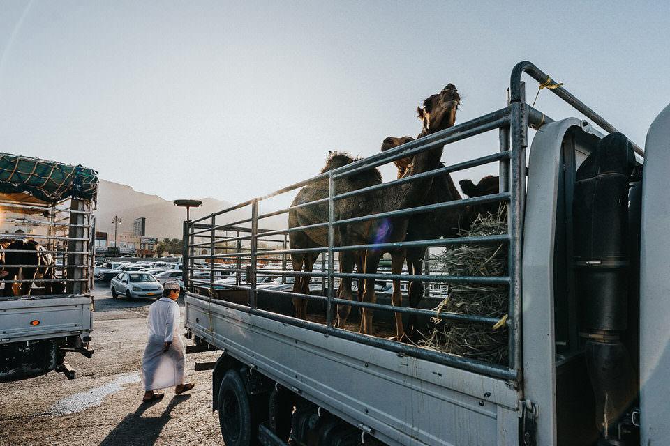 Tiere auf Lastwagen