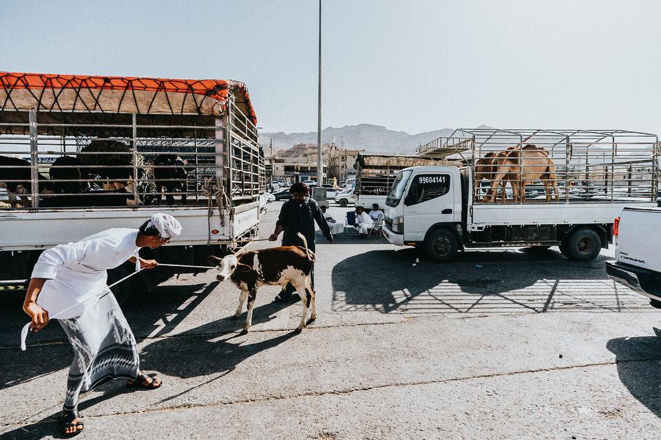 Ziege auf einer Straße