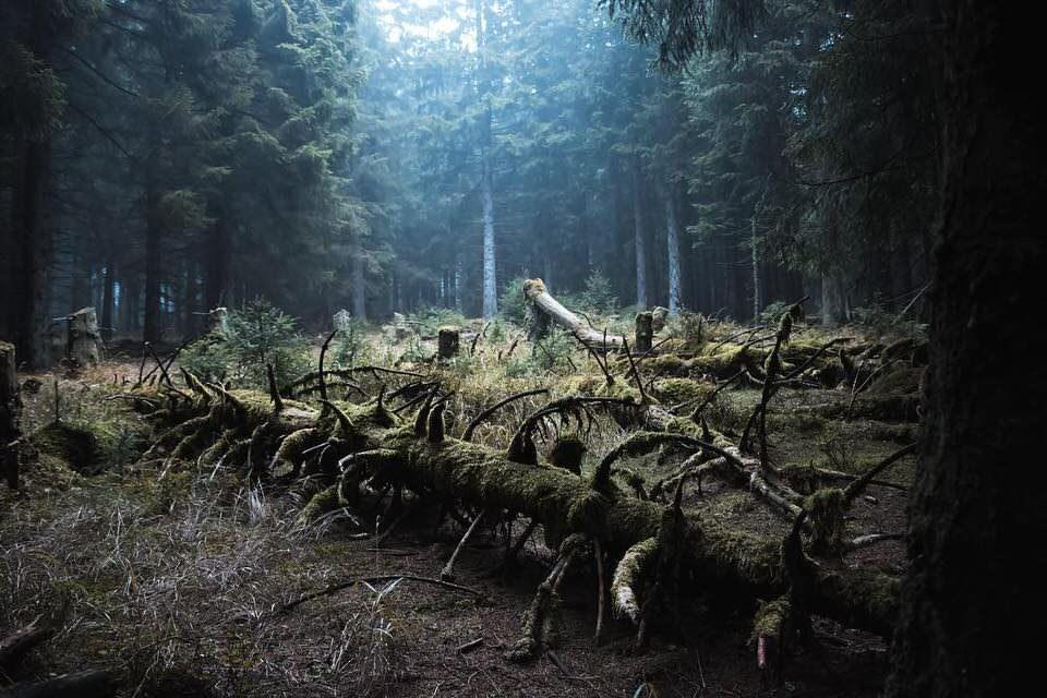 Herbstwald mit gefällten Bäumen