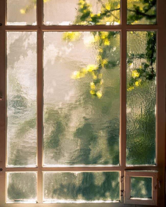Laub vor einem Fenster