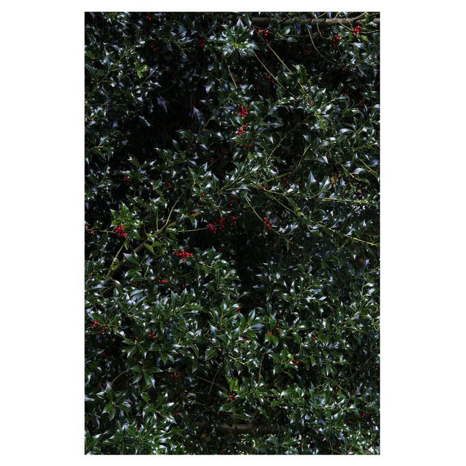 Hecke mit roten Beeren