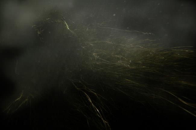Gras in Dunkelheit und Nebel.