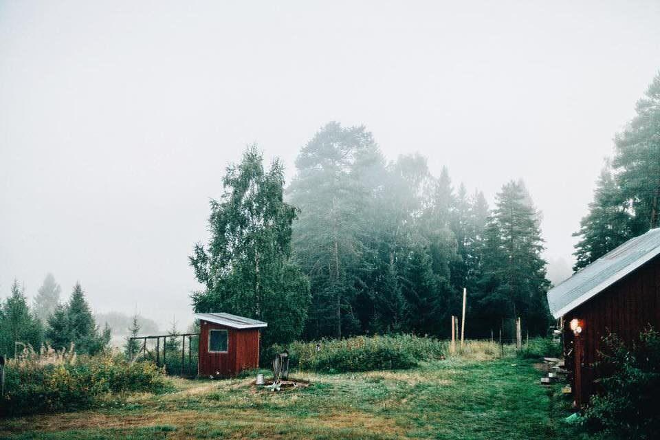 Nebel in einer Landschaft