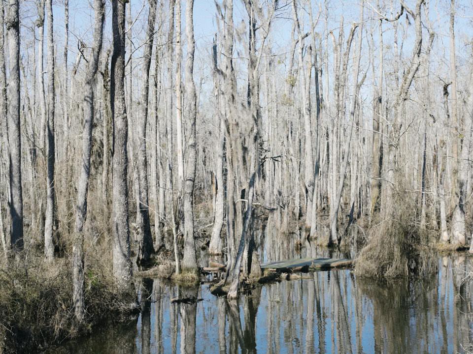 Wasserlandschaft mit Bäumen.