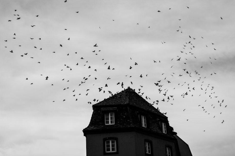 Vögel über einem Dach