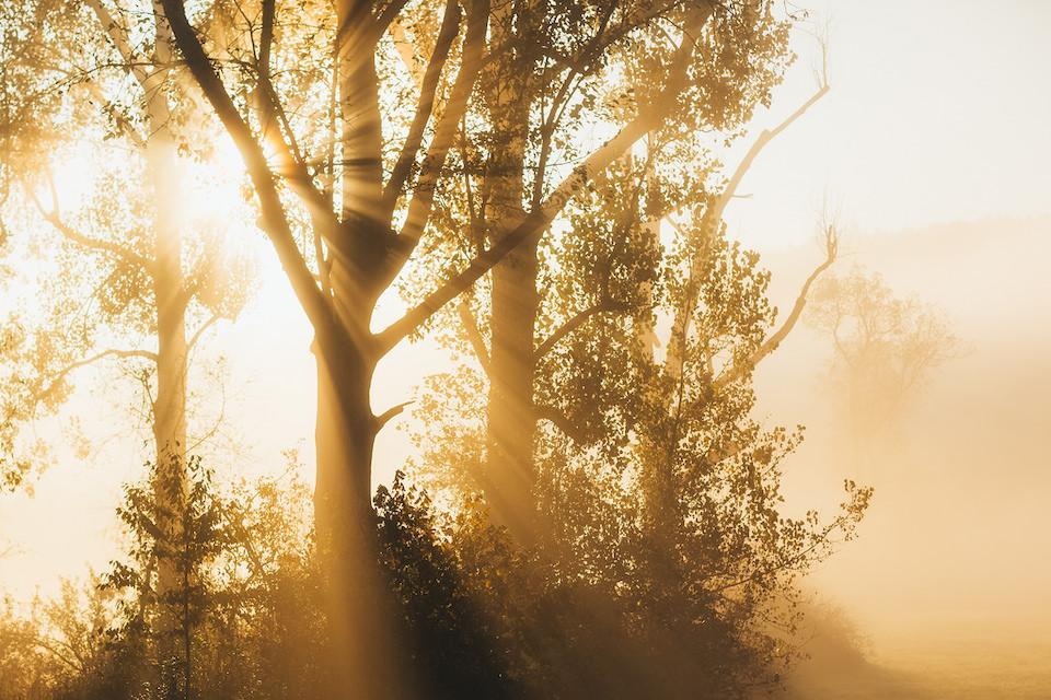 Sonnendurchflutete Bäume