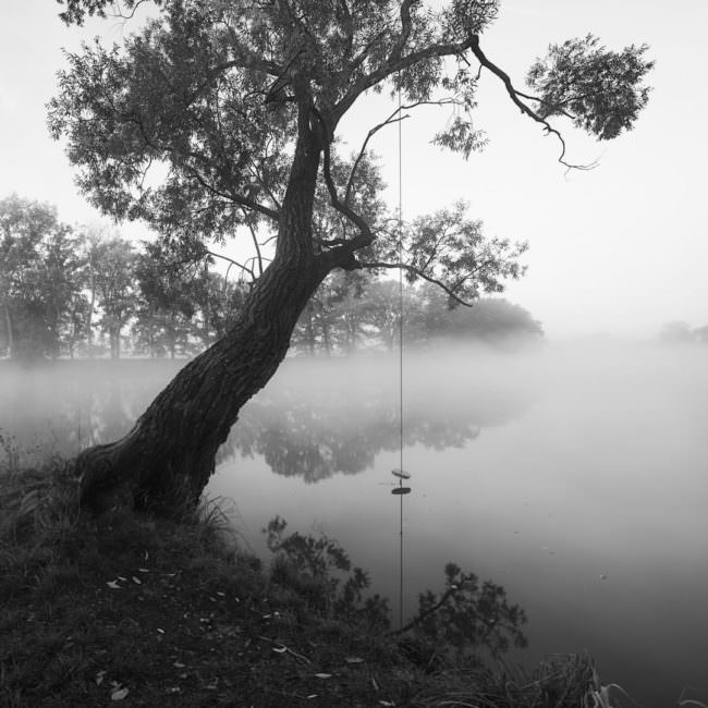 Nebel über einem See mit Baum und Schaukel