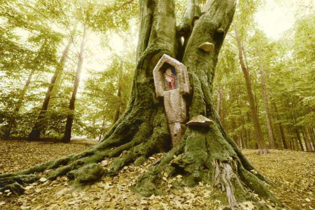 Baum mit religiöser Statue