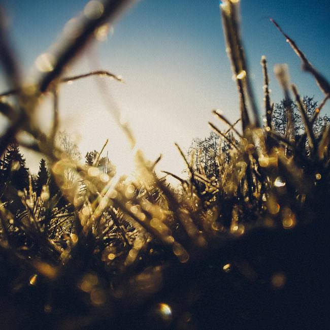 Makroaufnahme von Gras