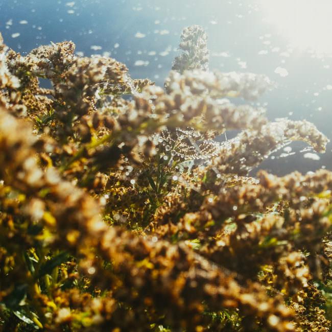 Blumen mit Wassertropfen