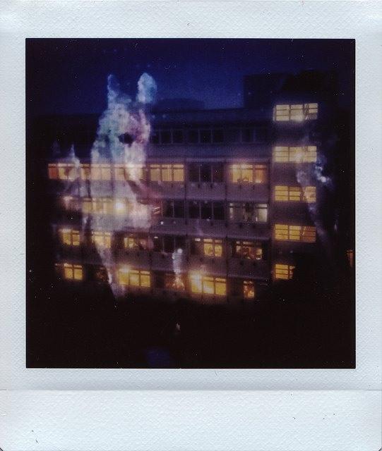 Doppelbelichtung Polaroid mit Wolf und Hausfassade
