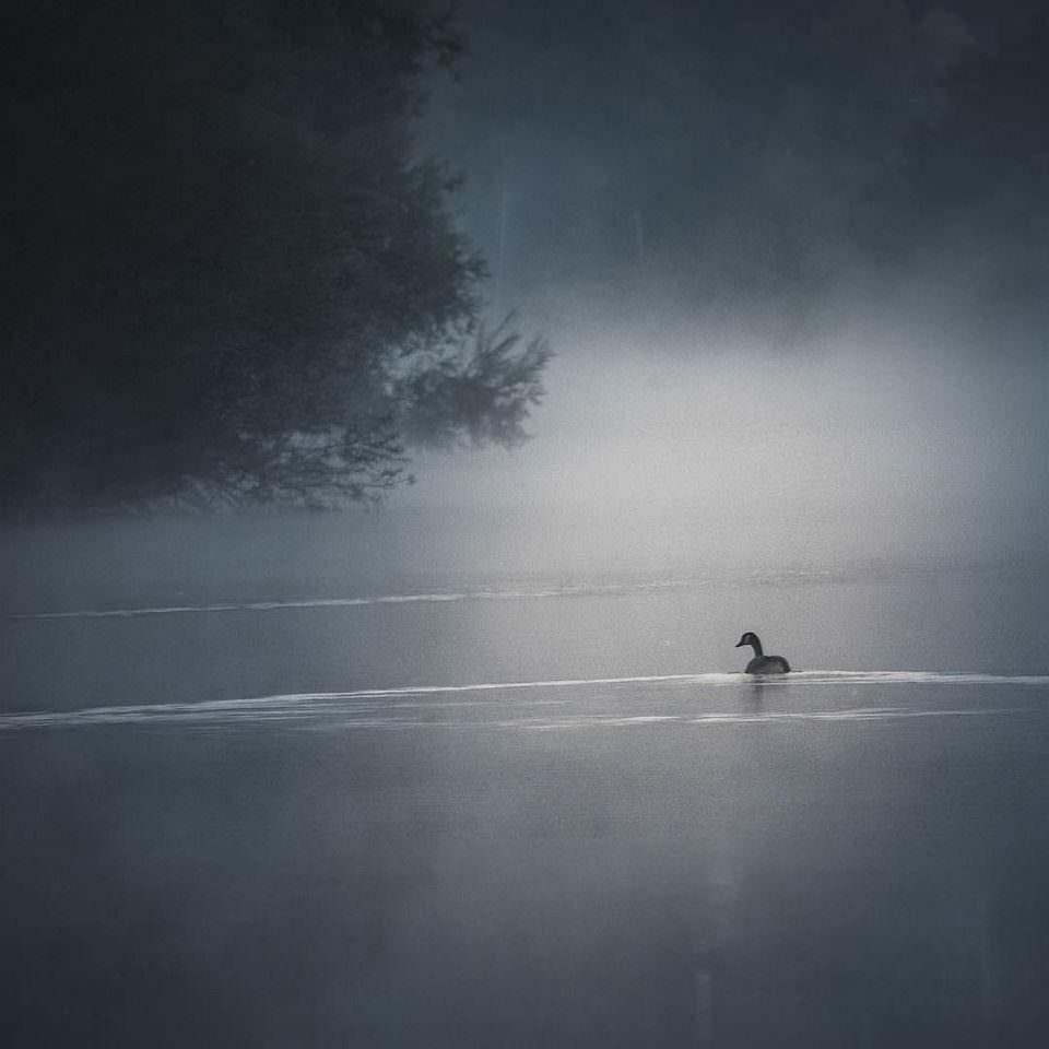 Vogel schwimmt auf einem Gewässer bei Nebel