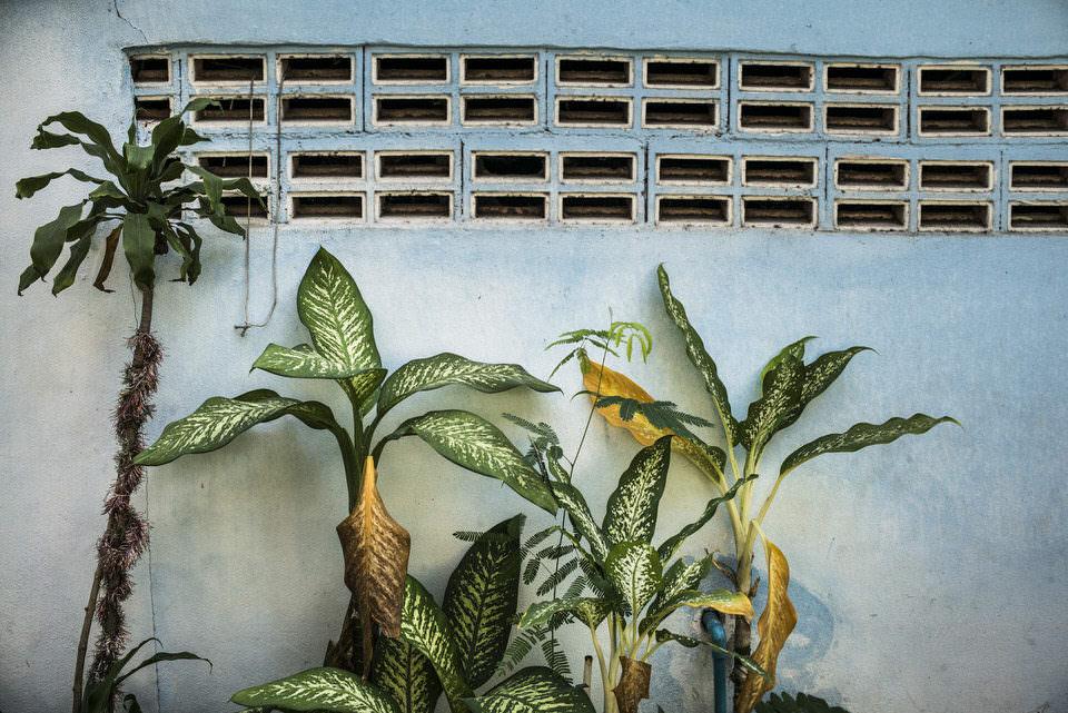 Palmen an einer blauen Wand