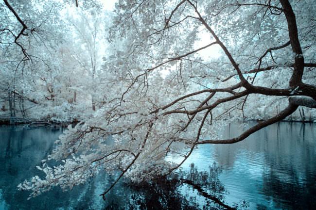 Baum über einem Bach