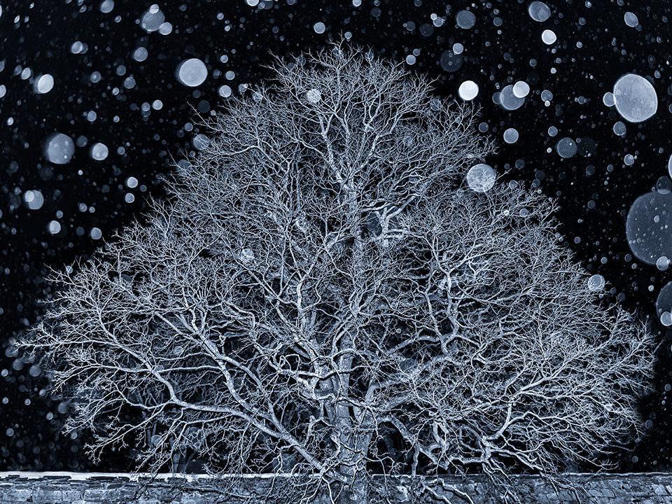 Ein Baum in Schneetreiben