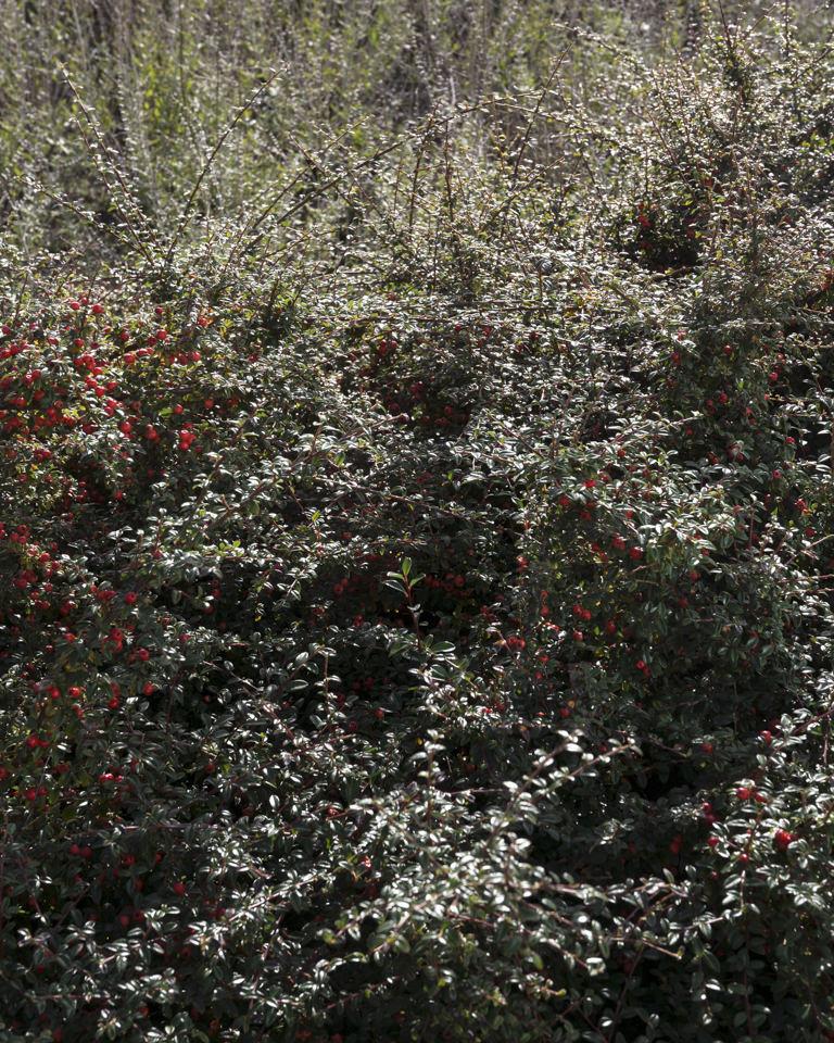 Ein Busch mit roten Blüten