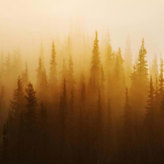 Bäume im goldenen Licht