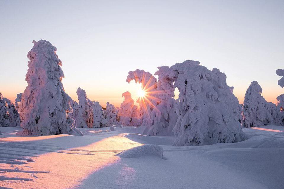 Bäume im Schnee
