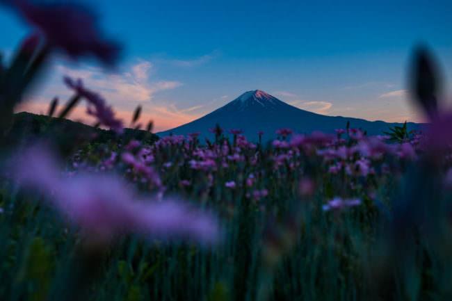 Berg mit Blumenwiese im Vordergrund