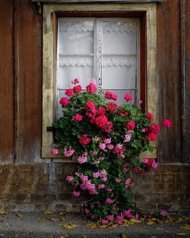 Viele Blumen auf einer Fensterbank