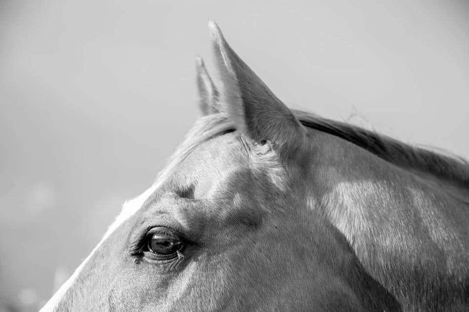Closeup Pferd