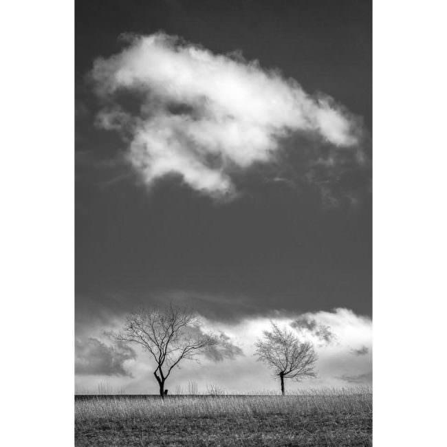 Kahle Bäume mit Wolken
