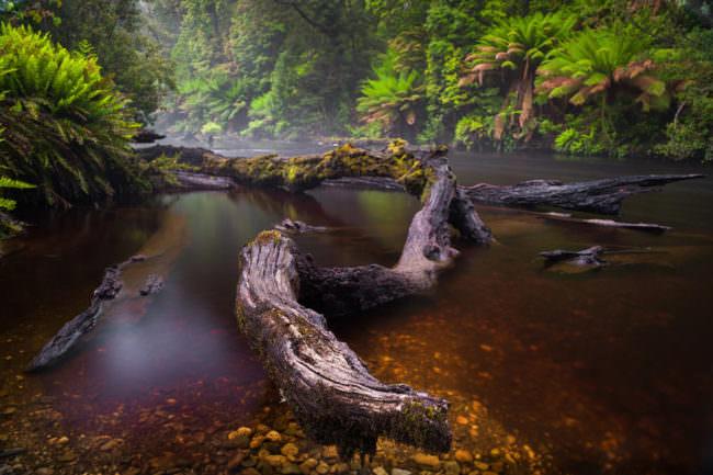 Fluss mit Schwemmholz