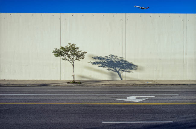 kleiner Baum an einer Mauer an der Straße