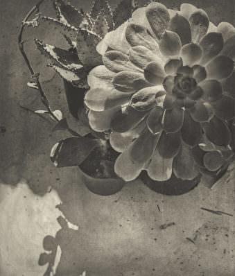 Blume von oben