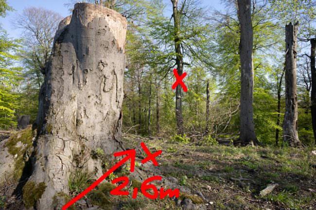 Waldaufnahme mit Grafiken