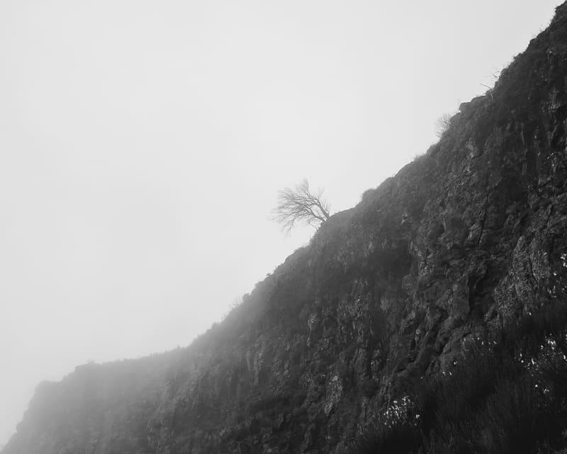 Baum auf einem Berg