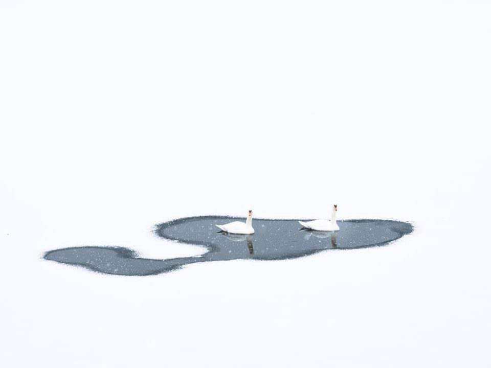 Zwei Schwäne auf einem zugefrorenem Gewässer