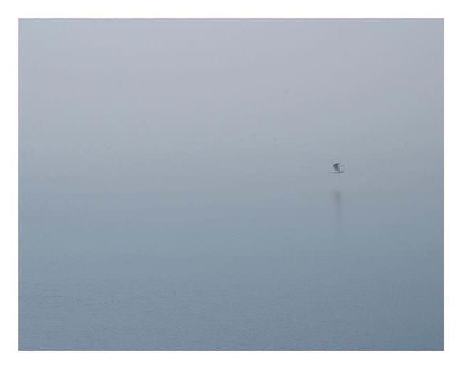 Vogel über einem Gewässer