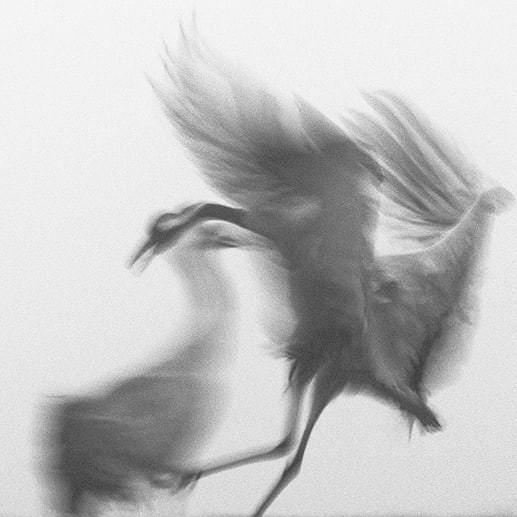 Sureales Bild von Vögeln