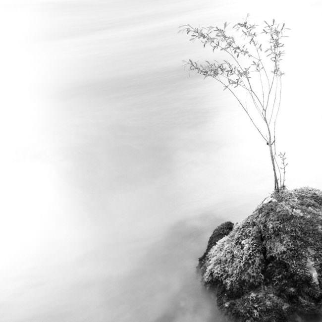 Surreales Bild einer Pflanze